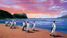 Framed Prints & Gifts - Penguins Walking