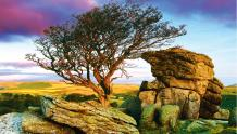 Framed Prints & Gifts - Ambition Tree