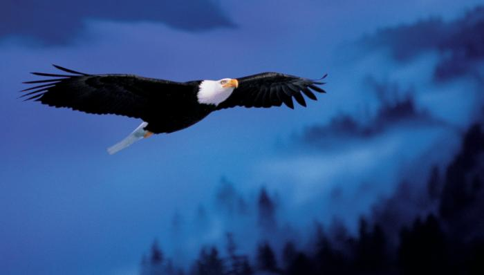 Dare to Soar Eagle Motivational Posters