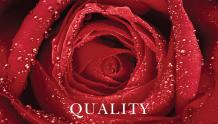 Framed Prints & Gifts - Quality Rose with Text