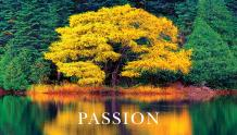 Framed Prints & Gifts - Passion Tree with Text