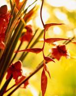 Framed Prints & Gifts - Ginger Flower
