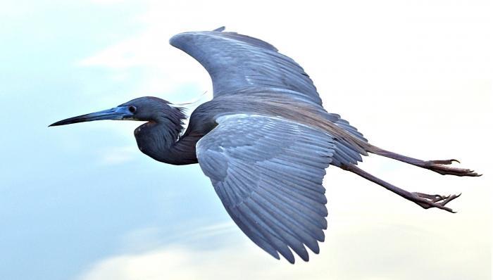 Heron Flight Motivational Posters