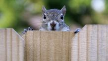Framed Prints & Gifts - Enthusiastic Squirrel