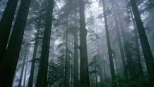 Framed Prints & Gifts - Trees Banding Together