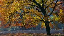 The Tree of Autumn