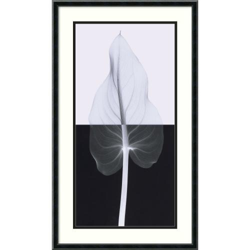 Steven N. Meyers Calla Leaf II Office Art