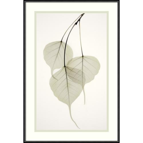 Albert Koetsier Bo Tree Office Art