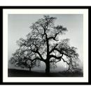 Ansel Adams Oak Tree, Sunset City, California, 1962 Office Art