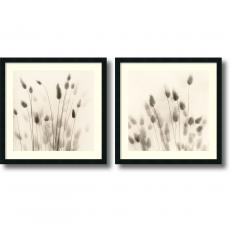 Flowers & Plants - Alan Blaustein Italian Tall Grass - set of 2 Office Art