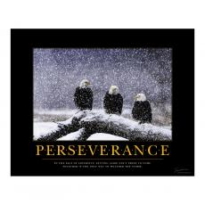 Closeout and Sale Center - Perseverance Eagles Motivational Poster