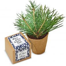 Working Growing Succeeding Pine Tree