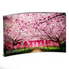 Desktop Prints - Gratitude Cherry Blossoms Curved Desktop Acrylic