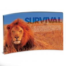 All Posters & Art - Survival Lion Curved Desktop Acrylic