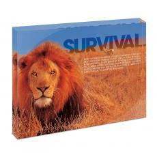 Acrylic Desktop Prints - Survival Lion Infinity Edge Acrylic Desktop