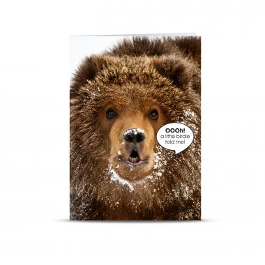 Little Birdie Grizzly Bear 25-Pack Greeting Cards