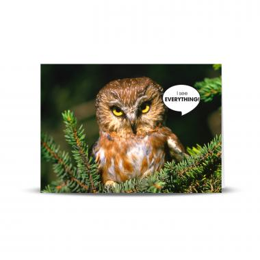 See Everything Owl 25-Pack Greeting Cards