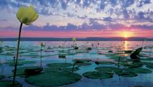 Framed Prints & Gifts - Rise Above Lily Pads