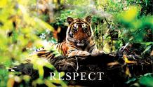 Framed Prints & Gifts - Respectful Tiger with Text