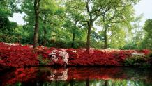 Framed Prints & Gifts - Excellence Azalea Pond