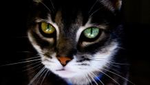 Framed Prints & Gifts - Cat with Green Eyes