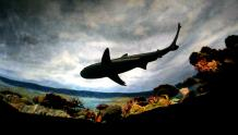 Framed Prints & Gifts - Shark's Underbelly