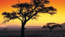 Framed Prints & Gifts - Sahara Sunset