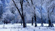 Framed Prints & Gifts - Snow Covered Trees
