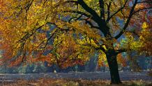 Framed Prints & Gifts - The Tree of Autumn