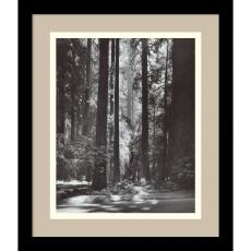 All Motivational Posters - Ansel Adams Redwoods, Founders Grove, 1966 Office Art