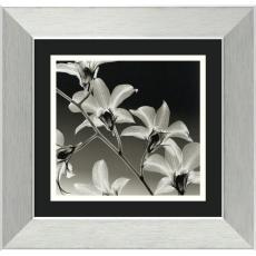 Steven N. Meyers - Steven N. Meyers Orchid Denrobium Office Art