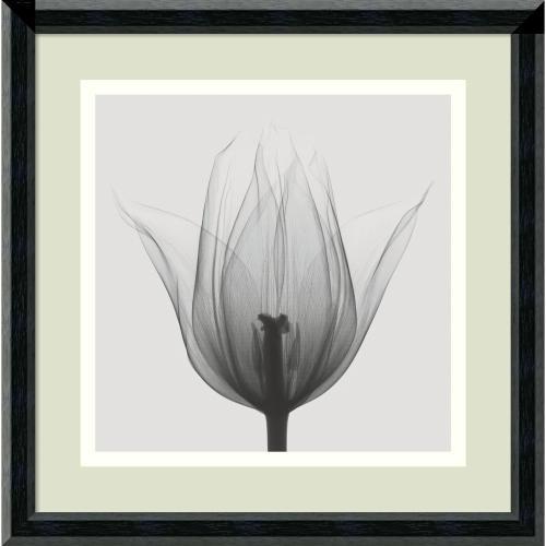 Steven N. Meyers Triumph Tulip Office Art