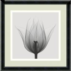 Fine Art - Steven N. Meyers Triumph Tulip Office Art