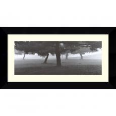 Black & White - Richard Calvo Trees in the Fog Office Art