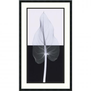 Steven N. Meyers Calla Leaf II Office Art