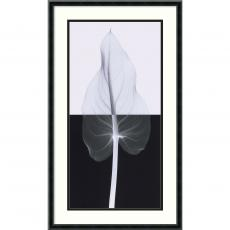 Steven N. Meyers - Steven N. Meyers Calla Leaf II Office Art