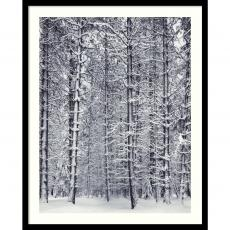 Ansel Adams - Ansel Adams Pine Forest in the Snow, Yosemite National Park Office Art