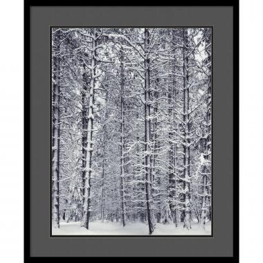 Ansel Adams Pine Forest in the Snow, Yosemite National Park Office Art