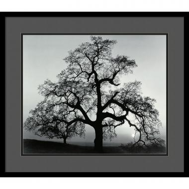 Ansel Adams Oak Tree, Sunset City, California, 1962 Office Art