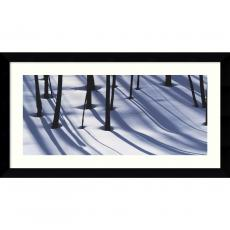 William Neill Pine Trees and Morning Shadows Office Art