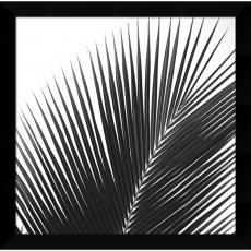 Jamie Kingham Palms 14 (detail) Office Art