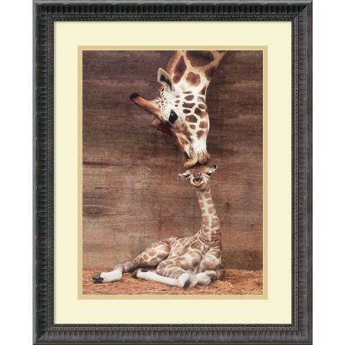 Ron D'Raine Makulu - Giraffe First Kiss Office Art