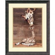 Animals - Ron D'Raine Makulu - Giraffe First Kiss Office Art