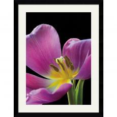 Amalia Veralli Pink Tulip Office Art