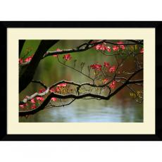 Andy Magee Dogwood in Bloom Office Art