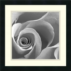 Rose Spiral II Office Art