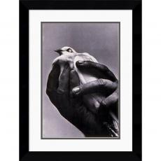 Harold Feinstein Bird in Hand, 1957 Office Art