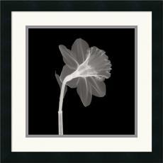 Veiled Blossom Office Art