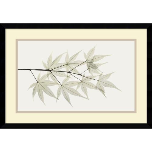 Albert Koetsier Japanese Maple Office Art