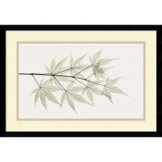 Flowers & Plants - Albert Koetsier Japanese Maple Office Art
